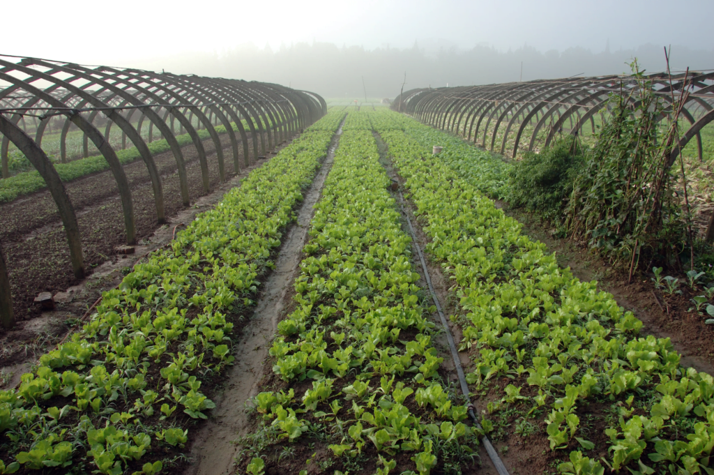 Early rollout of Sustainable Farming Incentive Scheme, Government announce